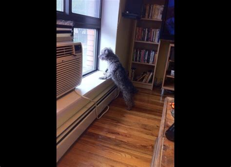 looking out window dogs looking out windows submit your own photos huffpost