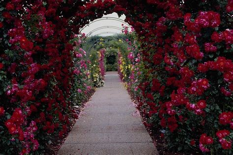 Images Of Beautiful Flower Gardens Image Collection Beautiful Flower Garden Wallpapers