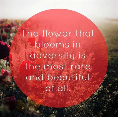bloom a tale of courage and breaking through limits books the flower that blooms in adversity is the most and