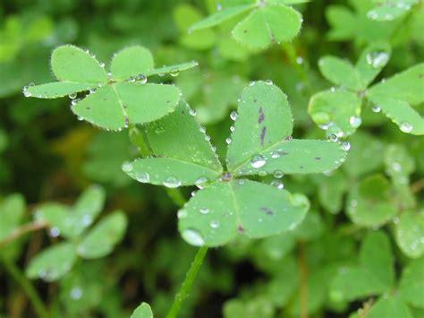 hydration lowers blood pressure101010101010101010101010100 07 health benefits of alfalfa leaves