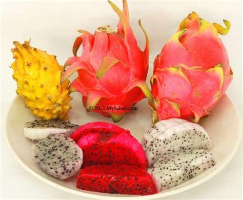 Bibit Timun Suri Unggul cara menanam buah naga dari biji indobeta