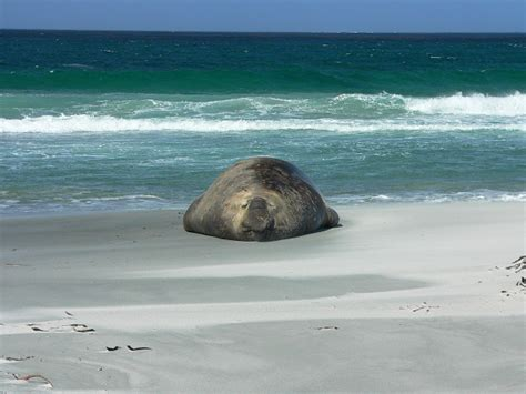 moon patagonia including the falkland islands travel guide books travel to sea island on the falkland islands to
