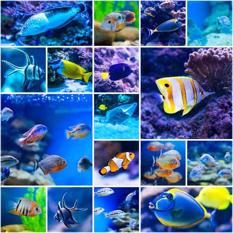 colorful saltwater fish ornamental fish southeast agnet