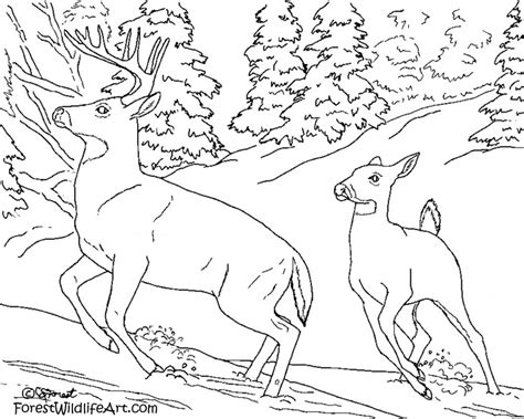 rainforest animals coloring page az coloring pages