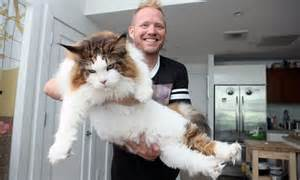 Bathtub For Baby Online Now That S A Fat Cat Samson Is New York S Biggest Feline