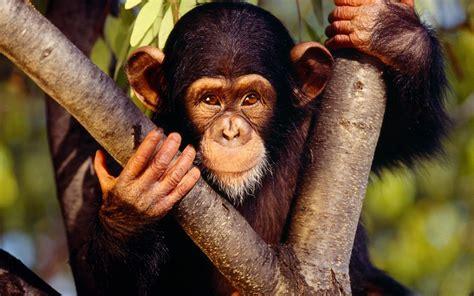 monkey wallpaper cute monkey photo wide 1440x900