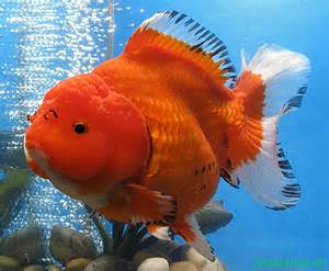 and sustain a healthy goldfish aquarium . . There are many types
