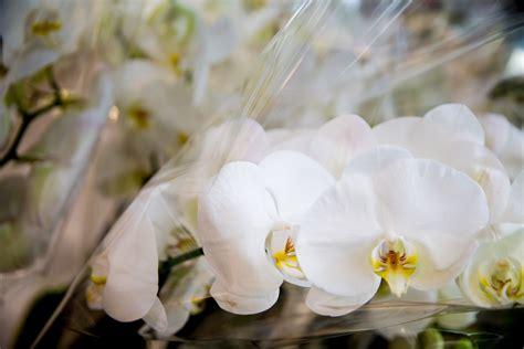 fiori per san valentino i fiori giusti per san valentino 5 variet 224 per dire ti