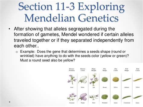 section 11 3 exploring mendelian genetics chapter 11 introduction to genetics