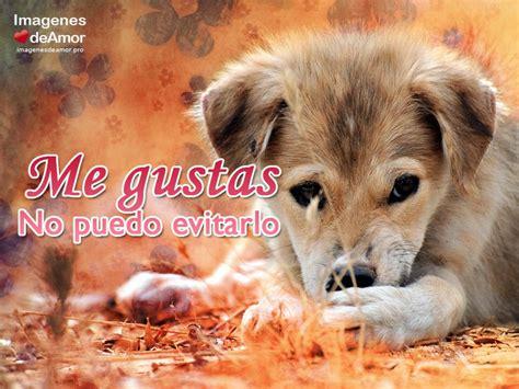 imagenes tiernas con frases perritos con frases de amor www pixshark com images