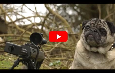 pug gun a pug with a gun will sergeant pugsley save the day probably not he is a