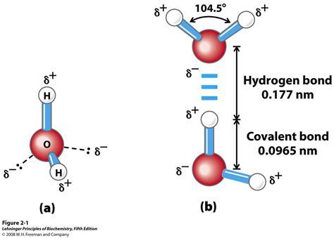 molecule diagram biochemistry chapter 4 flashcards easy notecards