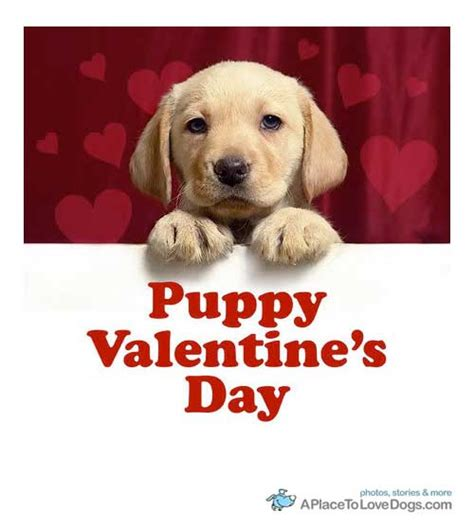 day with puppy happy valentines day with dogs pictures for s litle pups