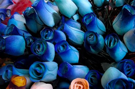 imagenes de flores azules rosas azules car interior design