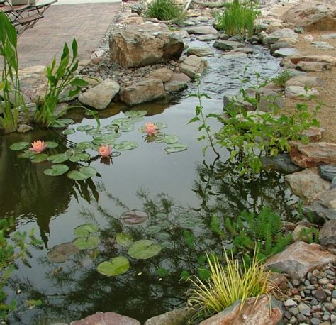 water garden ideas 11 to guide water ideas start a back