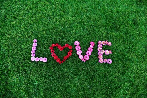 imagenes fondo blanco de amor imagen de cesped con decorado en flores foto gratis