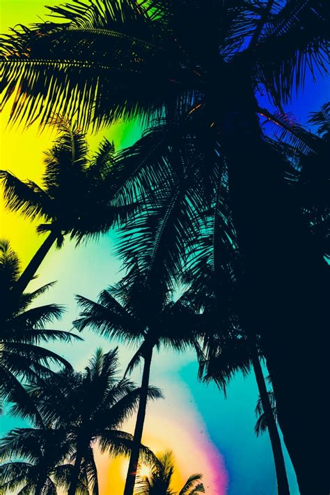 colorful palm trees silhouette of palm trees with colorful sky photo free
