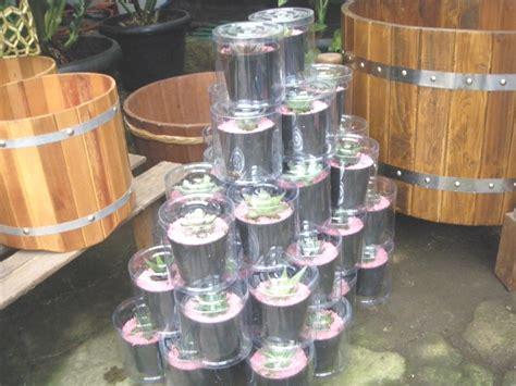 Jual Pot Anggrek Jogja souvenir tanaman souvenir tanaman kaktus dan sukulen
