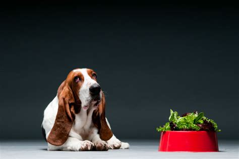 can dogs eat kale can dogs eat kale pet friendly