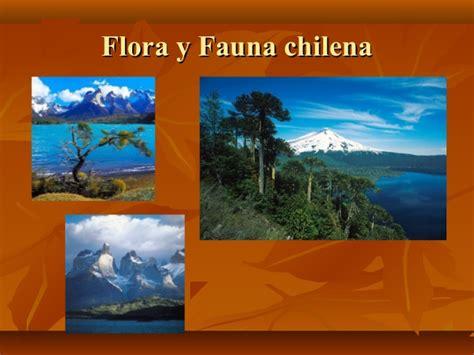 power zonas geo y flora y fauna flora y fauna