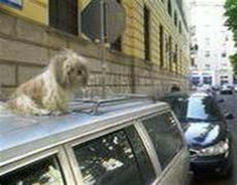alitalia cani in cabina corriere della sera in viaggio con loro le regole