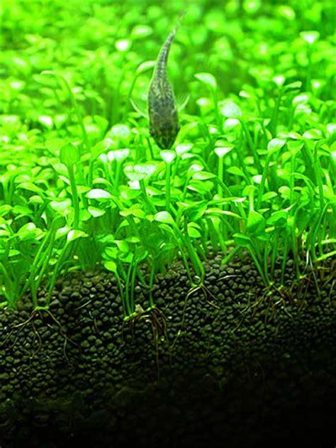 Evolution Aquasoil Aquatic Soil adg showroom big pictures post 3 of 3 aquascaping aquatic plant central
