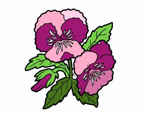 fiori di viola disegno fiori di viola pensiero colorato da utente non
