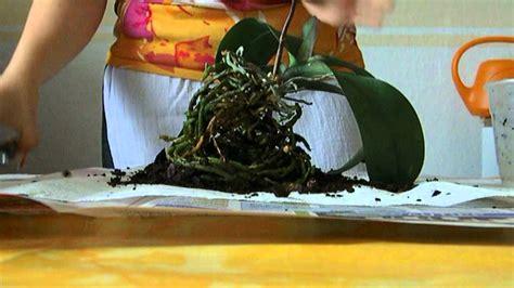 Wie Pflegt Orchideen Richtig 4793 by Quot Orchideen Richtig Umtopfen Schneiden Quot 1 2