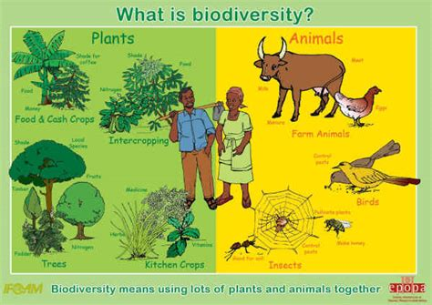 My Actions To Conserve Biodiversity Essay by Essay On Biodiversity Conservation