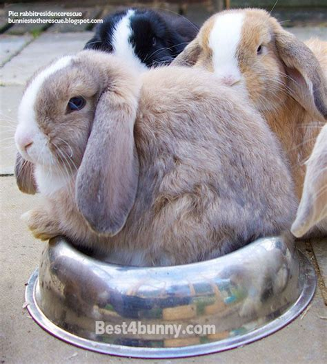 The Rabbit Learns To Climb understanding your rabbits behaviour your rabbit is happy problems your bunny