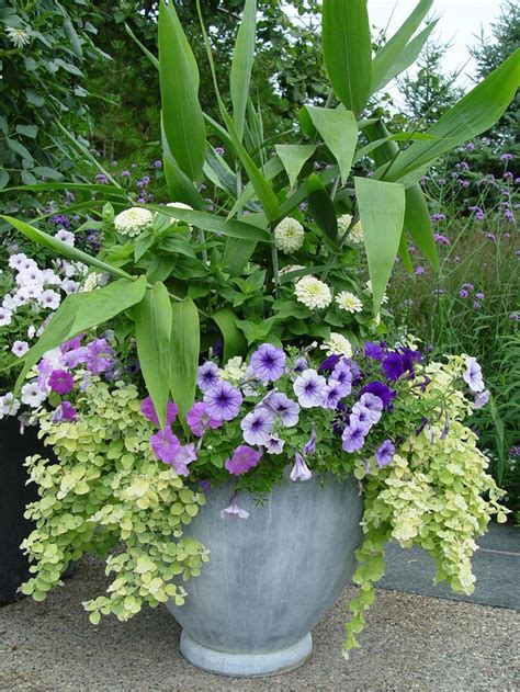 Flower Containers Container Idea White Zinnias 3 Shades Petunias And
