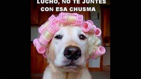 imágenes comicas graciosas imagenes de perros y gatos con frases graciosas espero que