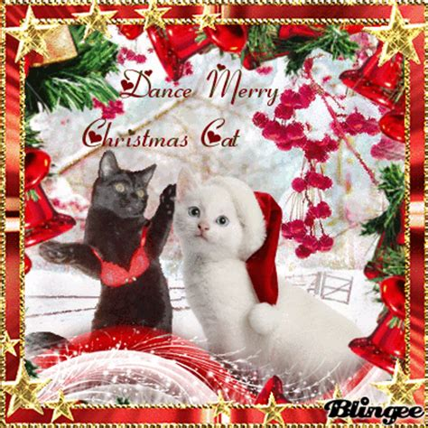 dance merry christmas cat picture  blingeecom