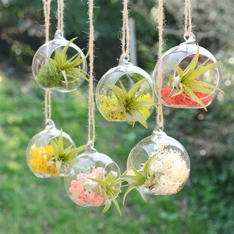 small hanging plants small hanging glass vase air plant terrarium by dingading