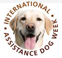 assistance dogs international international assistance week august 4th 10th south guide