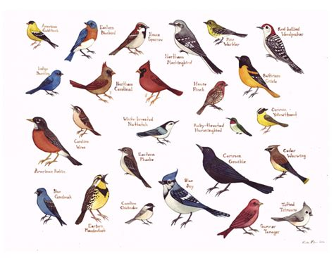 field guide painting birds of eastern north carolina