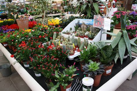 indoor plants bellis brothers farm shop garden centre
