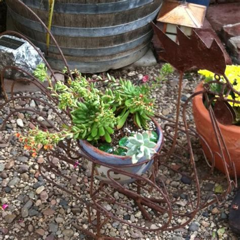 Succulent Container Garden Ideas Rooster Succulent Container Succulent Garden Ideas Pinterest