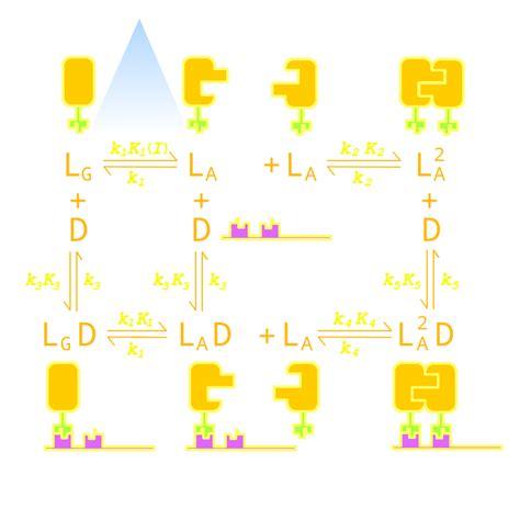 pattern formation pde team peking modeling 2012 igem org