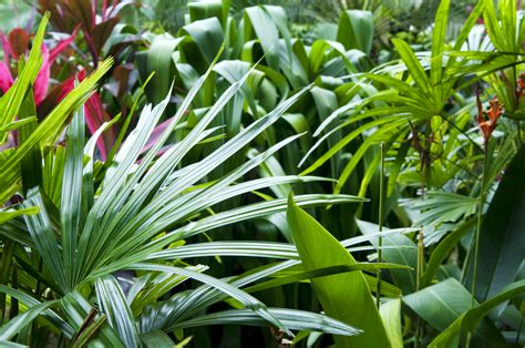 how to create a tropical backyard how to create a tropical garden flower power