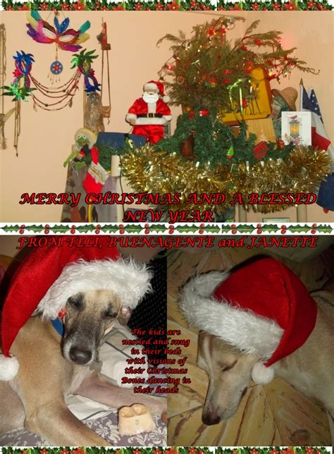 merry christmas  happy  year   dominican dog blog