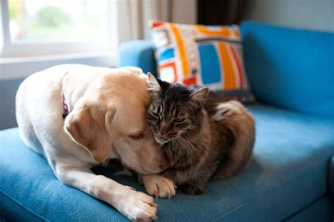 introducing cat to puppy how to introduce your new to your resident cats