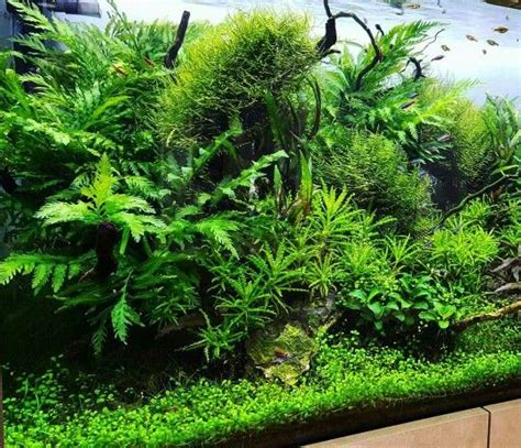 aquascape and new fish in the cichlid tank 1000 images about fish freshwater and aquarium on
