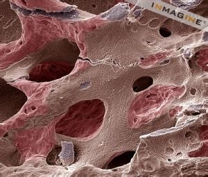microscopic images  structures  human body deepz
