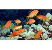 Los Animales Del Mar Rojo &161Desc&250brelos  Blog Buceo