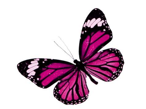 imagenes png mariposas imagenes png de mariposas imagui