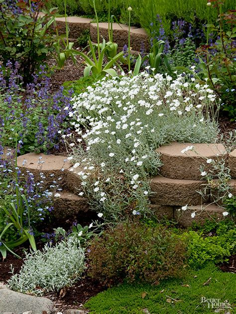 rock garden plants best plants for rock gardens
