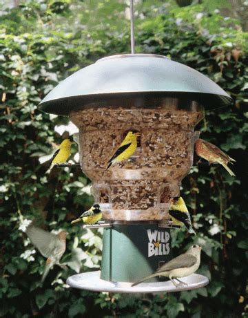 wild bills anti squirrel bird feeder 8 port bird feeding