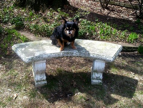 concrete garden bench for sale chubbsy on the vintage concrete garden bench flickr