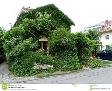 leaf house house with wine leaves and ivy editorial photography image 19965692